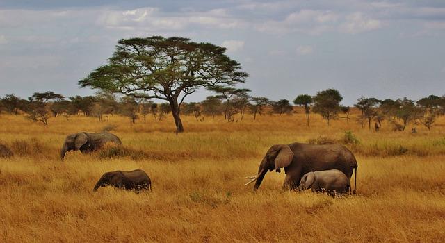 تعرف معنا علي المعالم السياحية لجمهورية تنزانيا الاتحادية