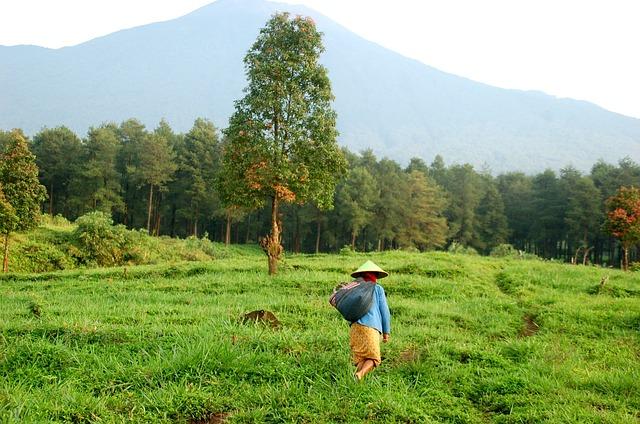 السياحة على جبل برومو جافا في إندونيسيا
